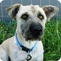 Adopt A Pet :: Stumpy - Cheyenne, WY