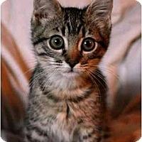Adopt A Pet :: Martini & Mae - Irvine, CA