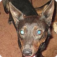 Adopt A Pet :: Coco - Sardis, TN