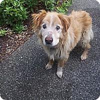 Adopt A Pet :: Lucky - Puyallup, WA