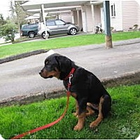 Adopt A Pet :: Sage - Surrey, BC