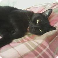Adopt A Pet :: Carley - Springfield, PA