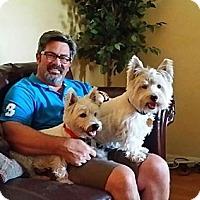 Adopt A Pet :: Sugar Bear - Carrollton, TX