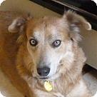 Adopt A Pet :: RITA