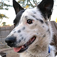Adopt A Pet :: Neala - Bellevue, NE