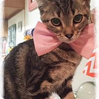 Adopt A Pet :: Juliette - Arlington/Ft Worth, TX