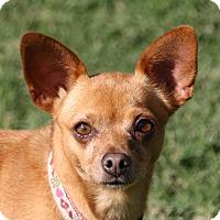 Adopt A Pet :: Lolly - Edmonton, AB