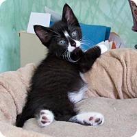 Adopt A Pet :: Zsa Zsa - Southington, CT