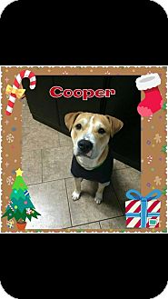 Labrador Retriever Mix Dog for adoption in Mt. Clemens, Michigan - Cooper