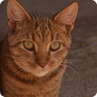 Adopt A Pet :: BitBit - Morganton, NC