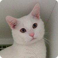 Adopt A Pet :: Austin - Troy, MI