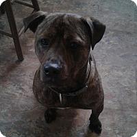 Adopt A Pet :: Loki - Channahon, IL