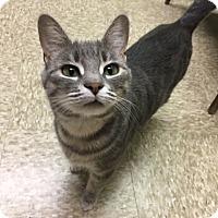 Adopt A Pet :: Suzie - Medina, OH