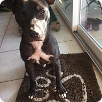 Adopt A Pet :: Gabe - Ocoee, FL