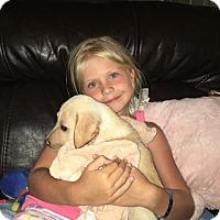 Adopt A Pet :: Butterscotch (The Caramel Crew) - Frederick, MD