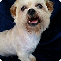 Adopt A Pet :: TedTed Turner - Urbana, OH