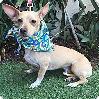 Adopt A Pet :: LEONARDO - Rancho Palos Verdes, CA