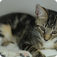 Adopt A Pet :: Phoebe - West Palm Beach, FL