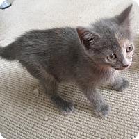 Adopt A Pet :: Rani - Covington, KY