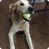 Adopt A Pet :: Moose #546 - Fort Worth, TX