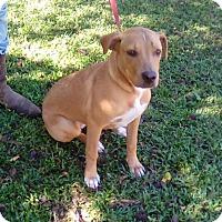 Adopt A Pet :: Cobie - Blountstown, FL