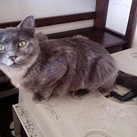 Adopt A Pet :: Cristelle - St. Cloud, FL