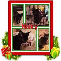 Adopt A Pet :: Nicky - Orange, CA