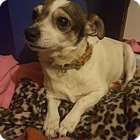 Adopt A Pet :: Skeeter - Blue Bell, PA