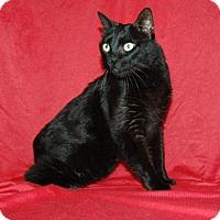 Adopt A Pet :: Fizz - Bradenton, FL