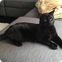 Adopt A Pet :: Zeus- Doglike, Large/Gentle! - Arlington, VA