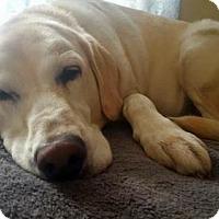 Adopt A Pet :: Josey - Denton, TX