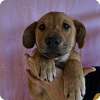 Adopt A Pet :: Gabe - Oviedo, FL