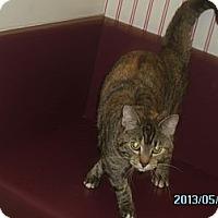 Adopt A Pet :: Melanie - Muscatine, IA
