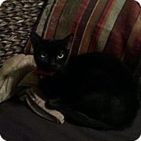 Adopt A Pet :: Billie Jean - Kansas City, MO
