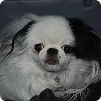 Adopt A Pet :: Lulu - Ogden, UT