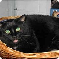 Adopt A Pet :: Jimbo - Mission, BC