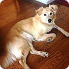Adopt A Pet :: Stevie-Rae