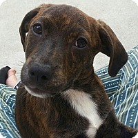 Adopt A Pet :: Jordan*ADOPTED!* - Chicago, IL
