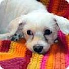 Adopt A Pet :: Sophy