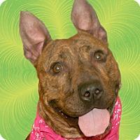 Adopt A Pet :: May - Cincinnati, OH