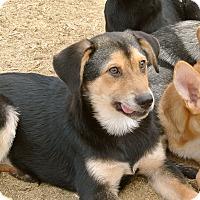 Adopt A Pet :: Robbie - Surrey, BC