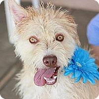 Adopt A Pet :: Tanner - Canoga Park, CA