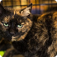 Adopt A Pet :: A..  Meadow - Mooresville, NC