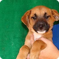 Adopt A Pet :: Queeny - Oviedo, FL