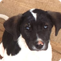 Adopt A Pet :: Rubin - Preston, CT
