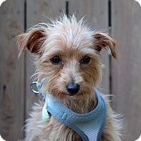 Adopt A Pet :: Persimmon - 5 pounds - Los Angeles, CA