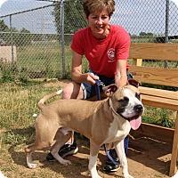 Adopt A Pet :: Obi - Elyria, OH