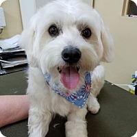 Adopt A Pet :: Indie - West LA, CA