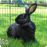 Adopt A Pet :: THELMA - Irvine, CA