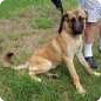 Adopt A Pet :: Piper - Sudbury, MA